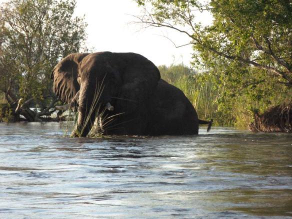 Elephant Zimbabwe 2012